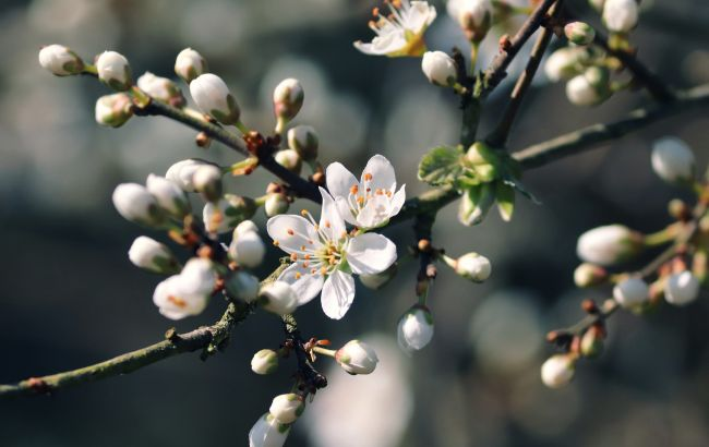 Заморозки и много дождей: синоптики дали прогноз погоды на апрель