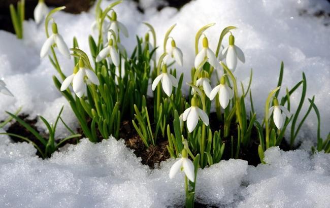 Фото: Весна в Украине (ozelenenie.in.ua)
