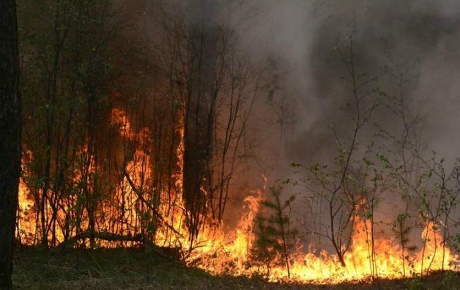 Фото: Украина на пороге чрезвычайной пожарной опасности