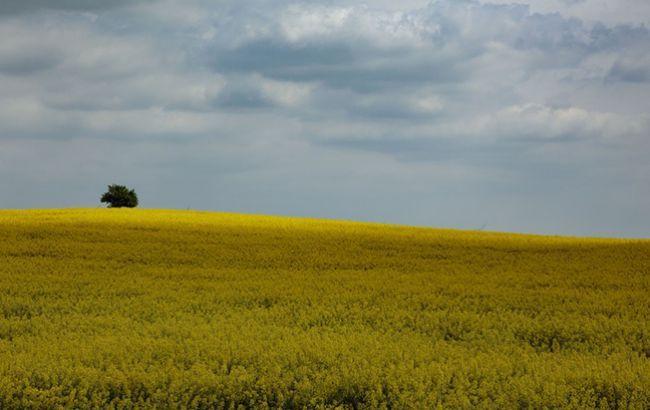 На референдумі проти ринку землі проголосують дві третини українців