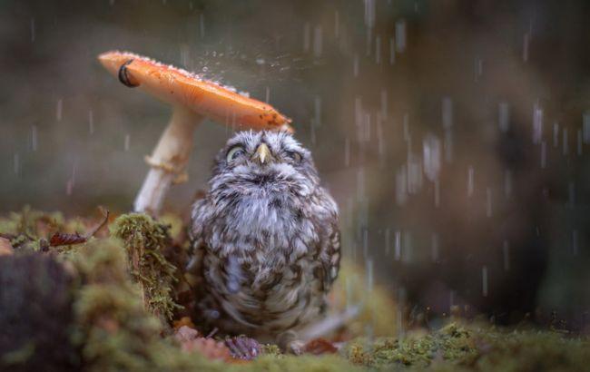 Погода на сьогодні: в Україні місцями дощі, температура до +11