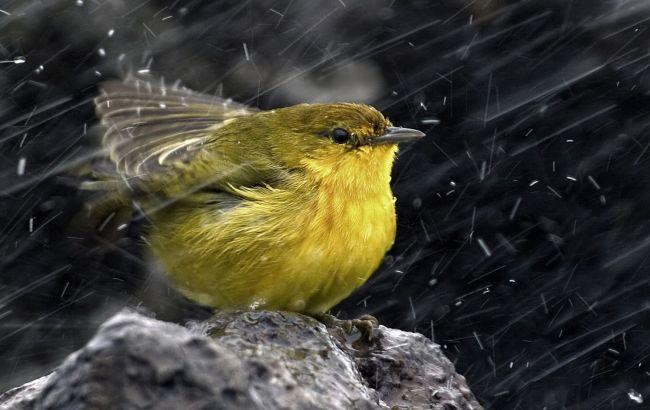 Фото: в Украине ожидаются дожди