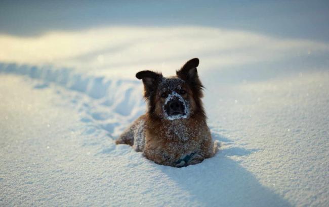 Фото: на більшій частині України сніг
