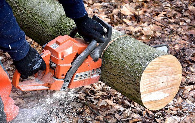 СудЕС признал нелегальными вырубки Беловежского леса вПольше