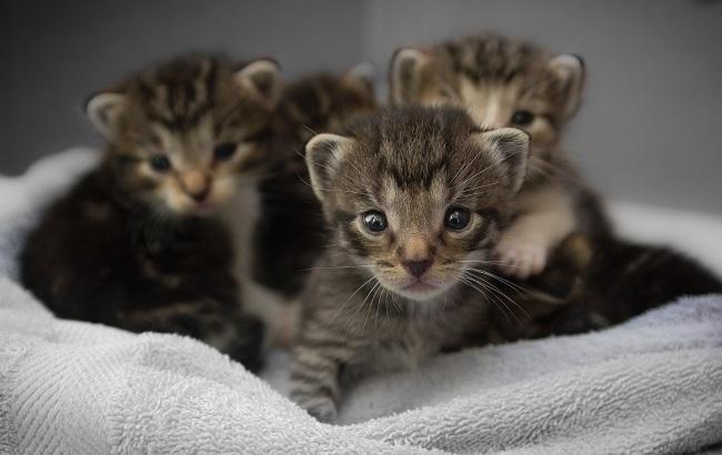 В Одесі господиня притулку довела до смерті сотні кошенят
