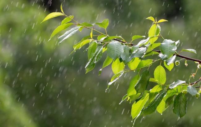 Прогноз погоди: дощ стримує спеку…