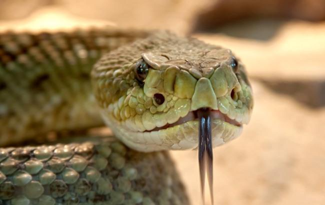 Нашествие змей: на Прикарпатье активизировались гадюки