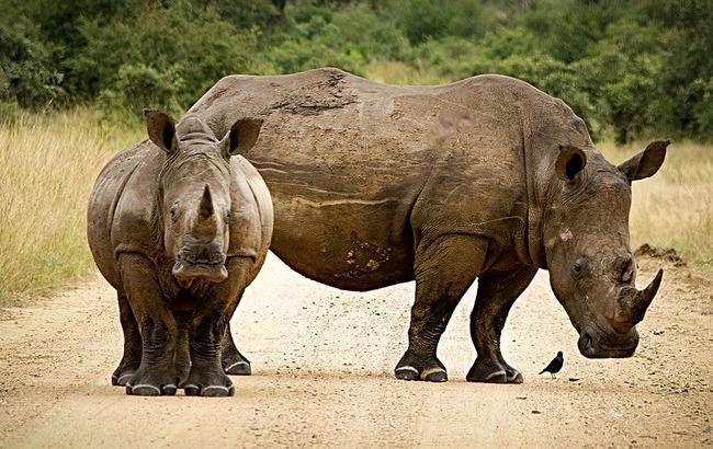 Експерти прогнозують вимирання тварин в Африці