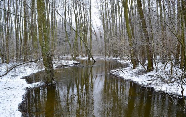 Фото: Река (pixabay.com/ru/users/buskeros)
