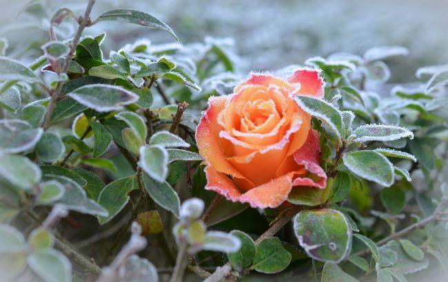 Заморозки ще будуть: синоптики налякали прогнозом на травень