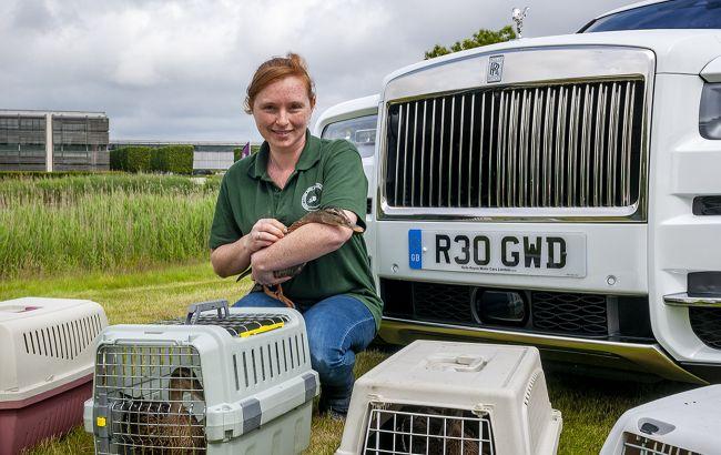 В Англии уток возят на роскошном внедорожнике Rolls-Royce Cullinan