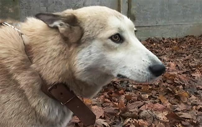 Собака-поводырь (Скриншот с YouTube/Сегодня)