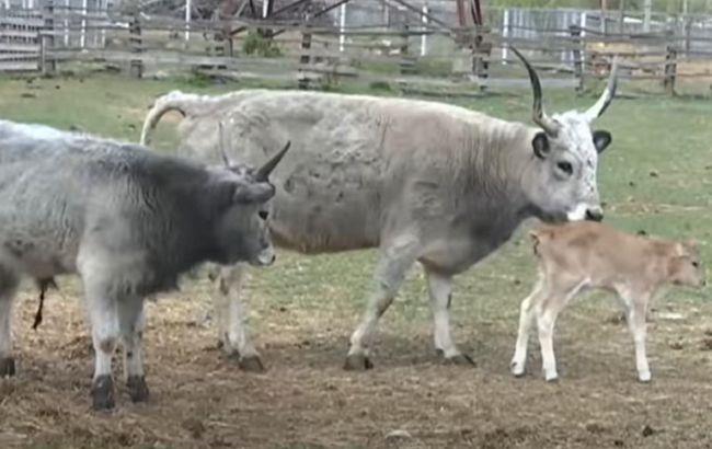 В закрытом на карантин винницком зоопарке небывалый рекорд рождаемости (видео)