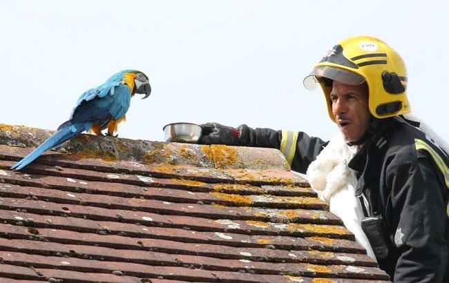 В Лондоне попугай обматерил пожарных, которые приехали его спасать с крыши дома