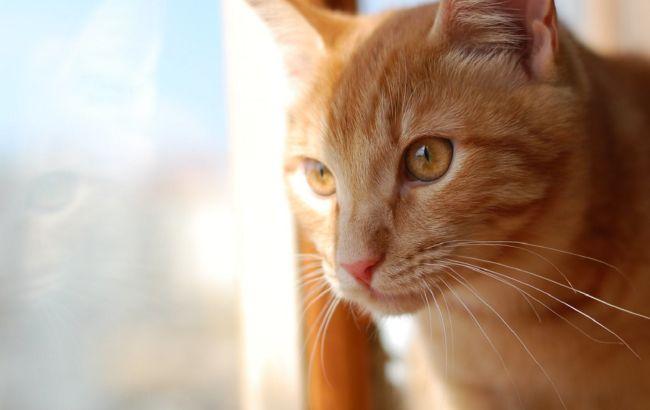 Під Тернополем скажений кіт напав на пенсіонерку: на карантин закрили кілька сіл