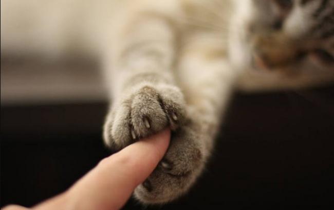 В Виннице кошка спасла от смерти офицера-МЧСника