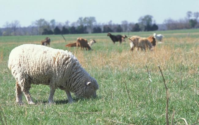 """Фото: Назначение земли - """"сенокошение и выпас скота"""" (wikipedia.org)"""