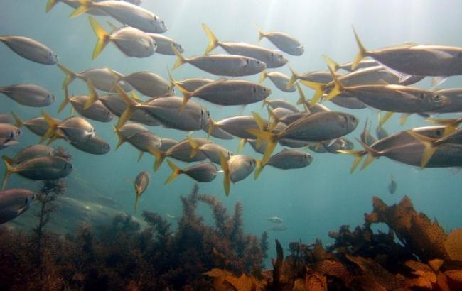Фото: Річка змінила колір, а риба в ній подохла (freeimages.com/Rick Hawkins)