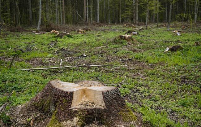 Фото: У центрі Києва вирубують дерева (pixabay.com/summa)