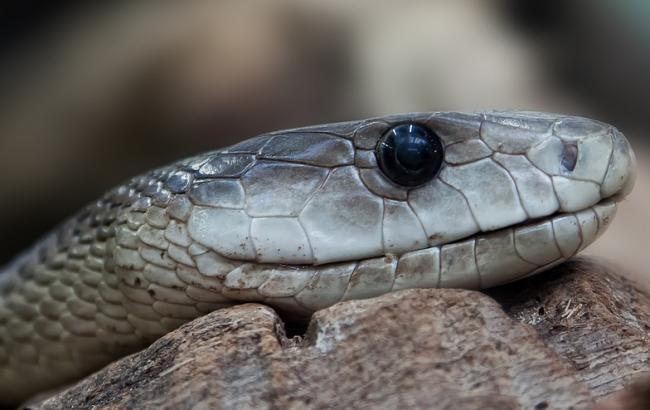 Фото: Змія (pixabay.com/ru/users/Foto-Rabe)