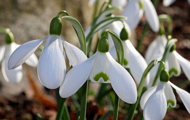 Синоптик порадувала прогнозом на день весняного рівнодення