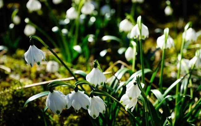 28 березня: свята і важливі події на цей день
