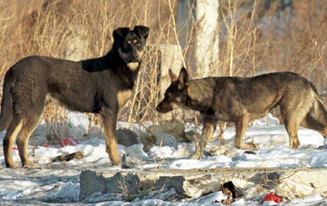 Фото: Бродячие псы становятся агрессивными в отсутствие пищи (unian.net)