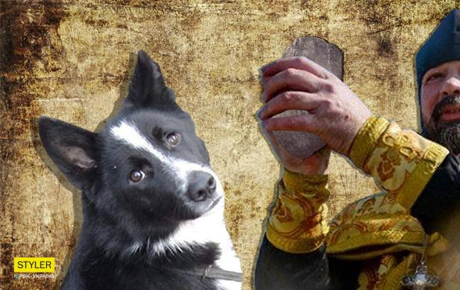 Фото: Собака (Коллаж РБК-Украина)