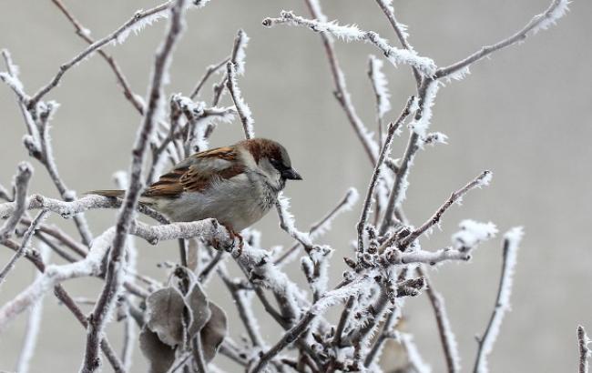 """""""Что за зима без мороза"""": синоптик рассказала о похолодании"""