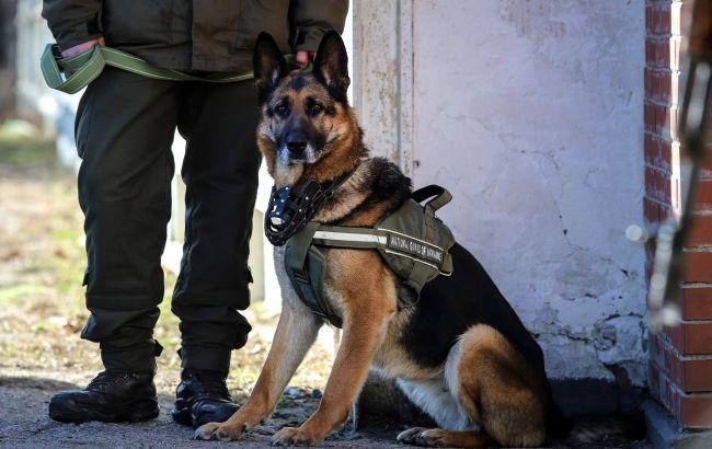 В Україні для виявлення хворих коронавірусом можуть використовувати службових собак