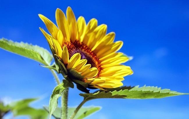 Сонячно і тепло: синоптики уточнили погоду на 25 червня