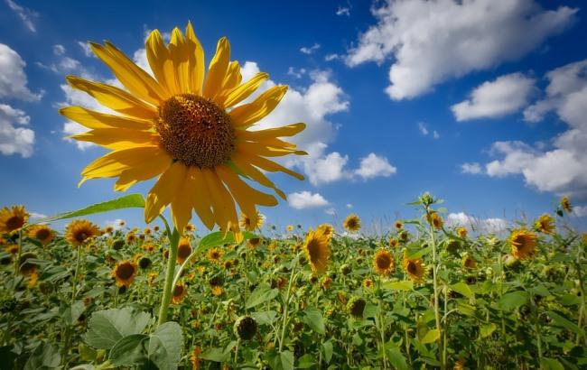 Де чекати опадів: синоптики дали прогноз на 12 липня