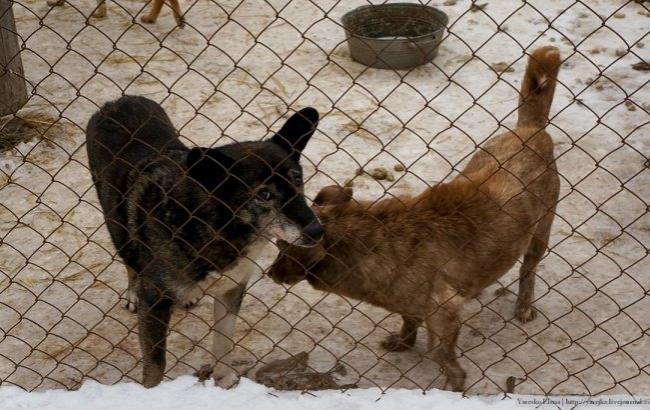 Фото: Животные из приюта (yarejka - LiveJournal)