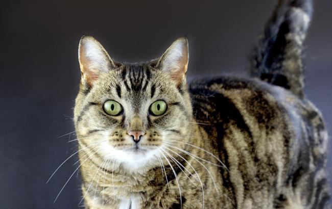 Фото: Кошке нашли хозяев (pixabay.com/PublicDomainPictures)