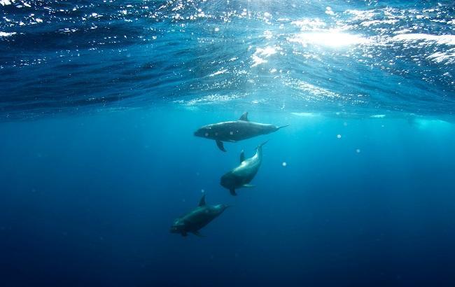 Фото: Дельфины (unsplash.com/taliacohen)