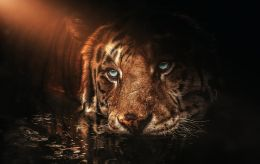 Черный Тигр станет тяжелым для этих знаков Зодиака: Глоба назвал неудачников 2022 года