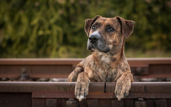 Фото: Собака (wallpapers.99px.ru)