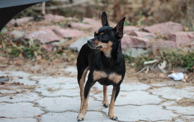 Фото: Собака (pixabay.com/ru/users/nastyachernikova720)