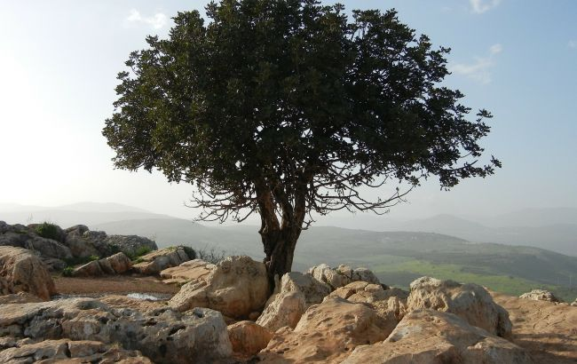 Ізраїль після тривалої перерви почне приймати іноземних туристів