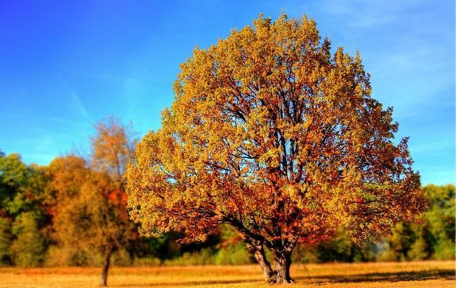 Фото: Осеннее равноденствие в 2017 году выпадает на 22 сентября (pixabay.com/giani)