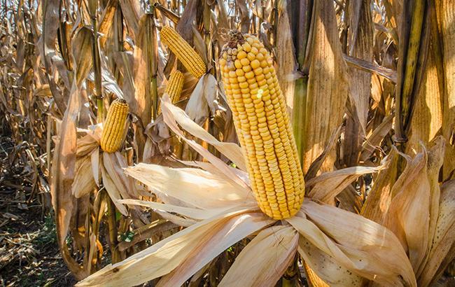 Фото: в Украине идет сбор урожая