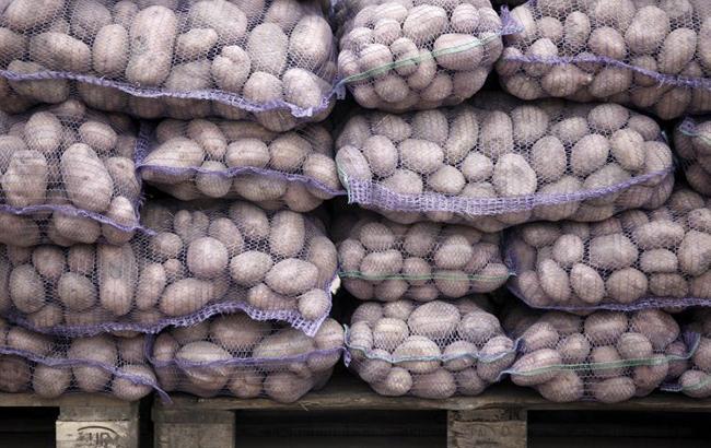 Фото: картошка (Владислава Мусиенко / УНИАН)