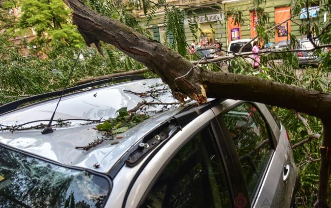 Фото: в Одессе упавшее дерево убило женщину