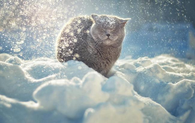 Фото: Кіт у снігу (deskbg.com)