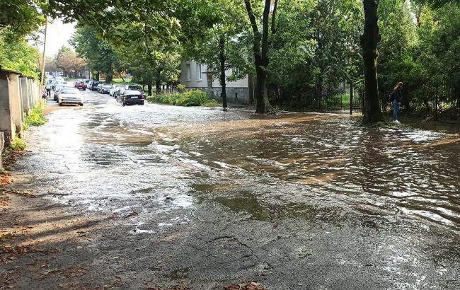 Повалені дерева та підтоплені вулиці: Львів накрили гроза та сильний вітер