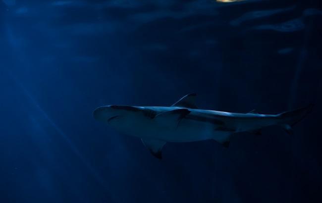 В Ірландії рибалка зловив найбільшу акулу в Європі