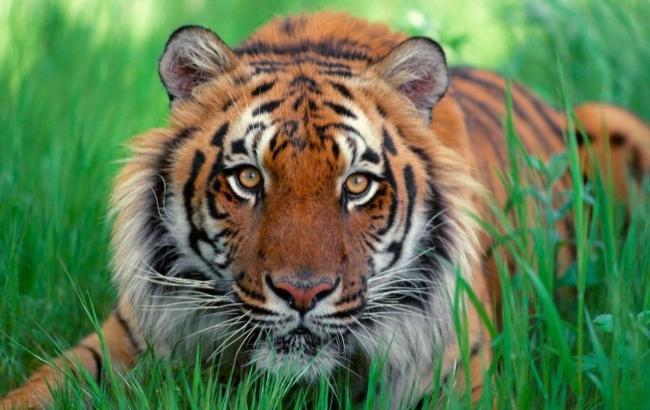 Фото: Восточный гороскоп-2016 для Тигра