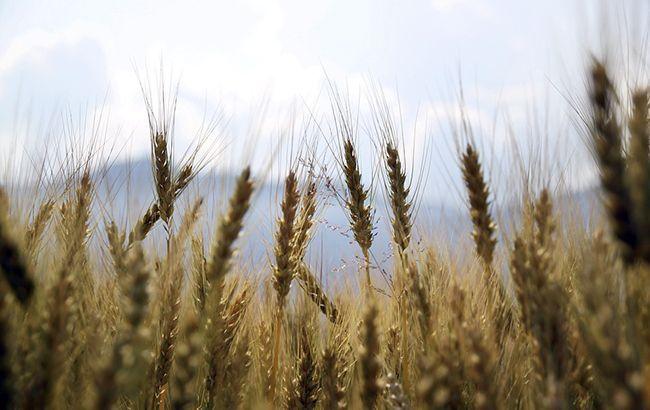 Украина в 2019 году установила новый рекорд по урожаю зерна