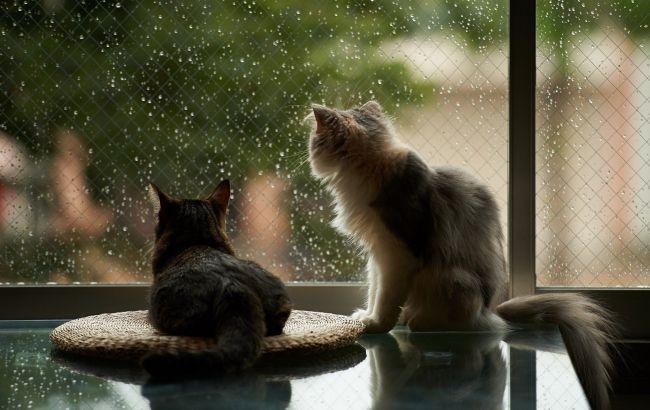 Фото: в Україні місцями дощі