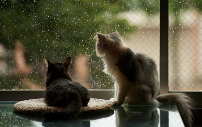 https://www.rbc.ua/static/img/w/i/window_cat_house_rain_2048x1152_1_650x410_1_650x410.jpg